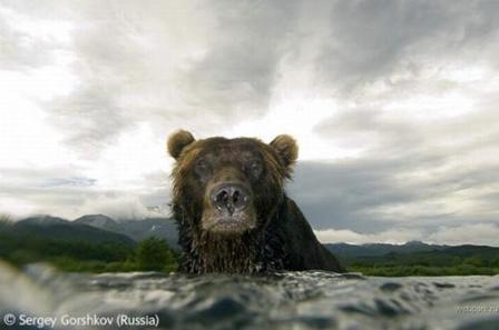 Wildlife Photographer of the Year 2007